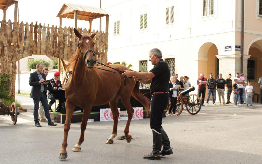 Dani Gidrana u Bjelovaru – županijska izložba Gidran pasmine konja u Bjelovaru